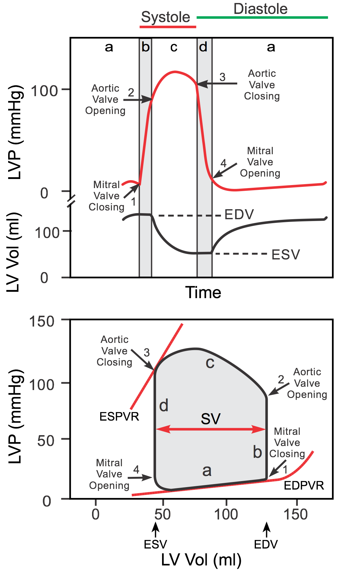left ventricular end systolic pressure volume relationship of the lungs
