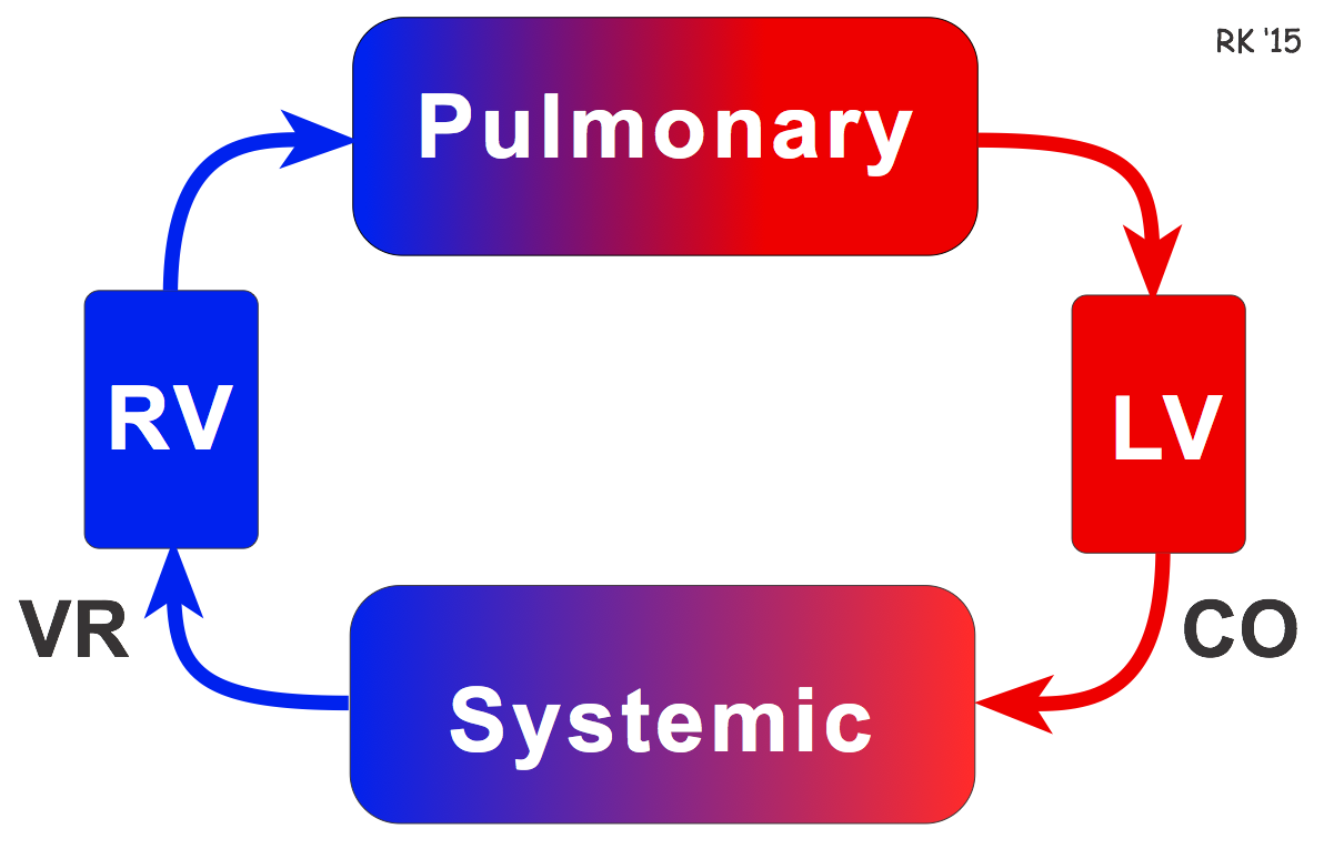 Pulmonary And Systemic Circulation Concept Map.Cv Physiology Venous Return Hemodynamics