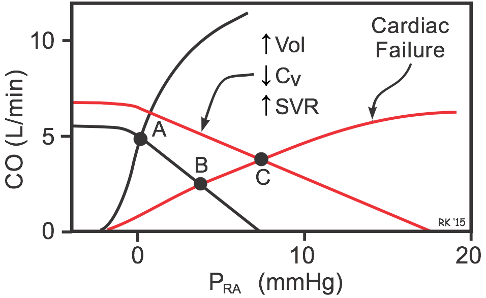 cardiac and systemic vascular function curves