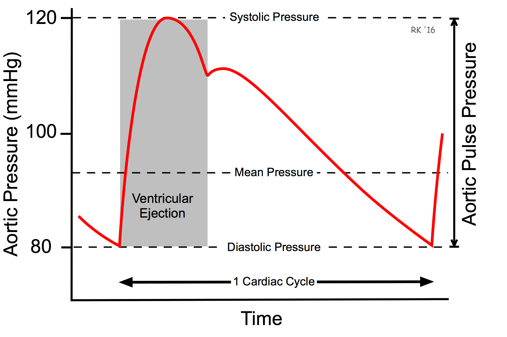 Cv physiology arterial and aortic pulse pressure