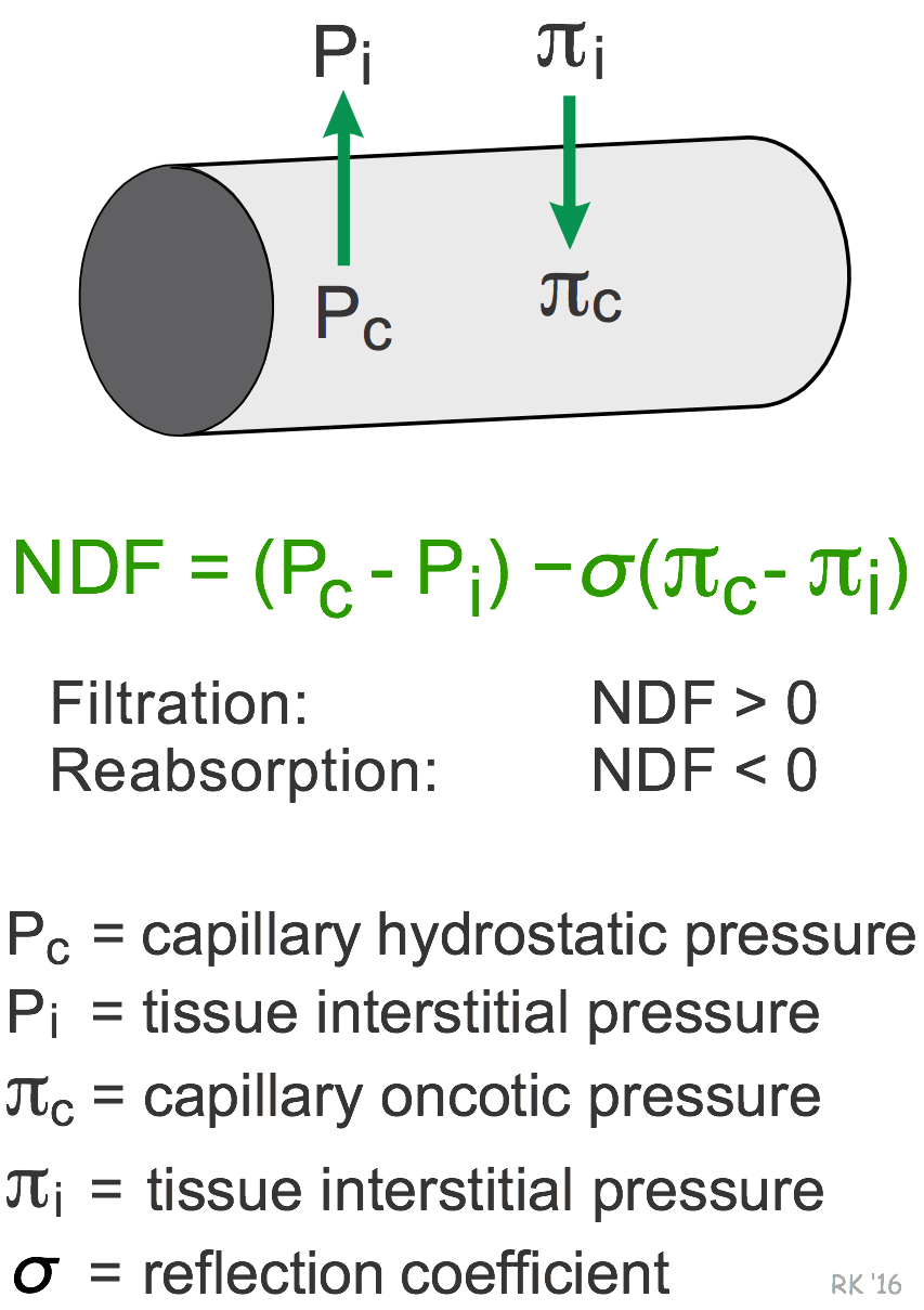 capillary filtration net driving force
