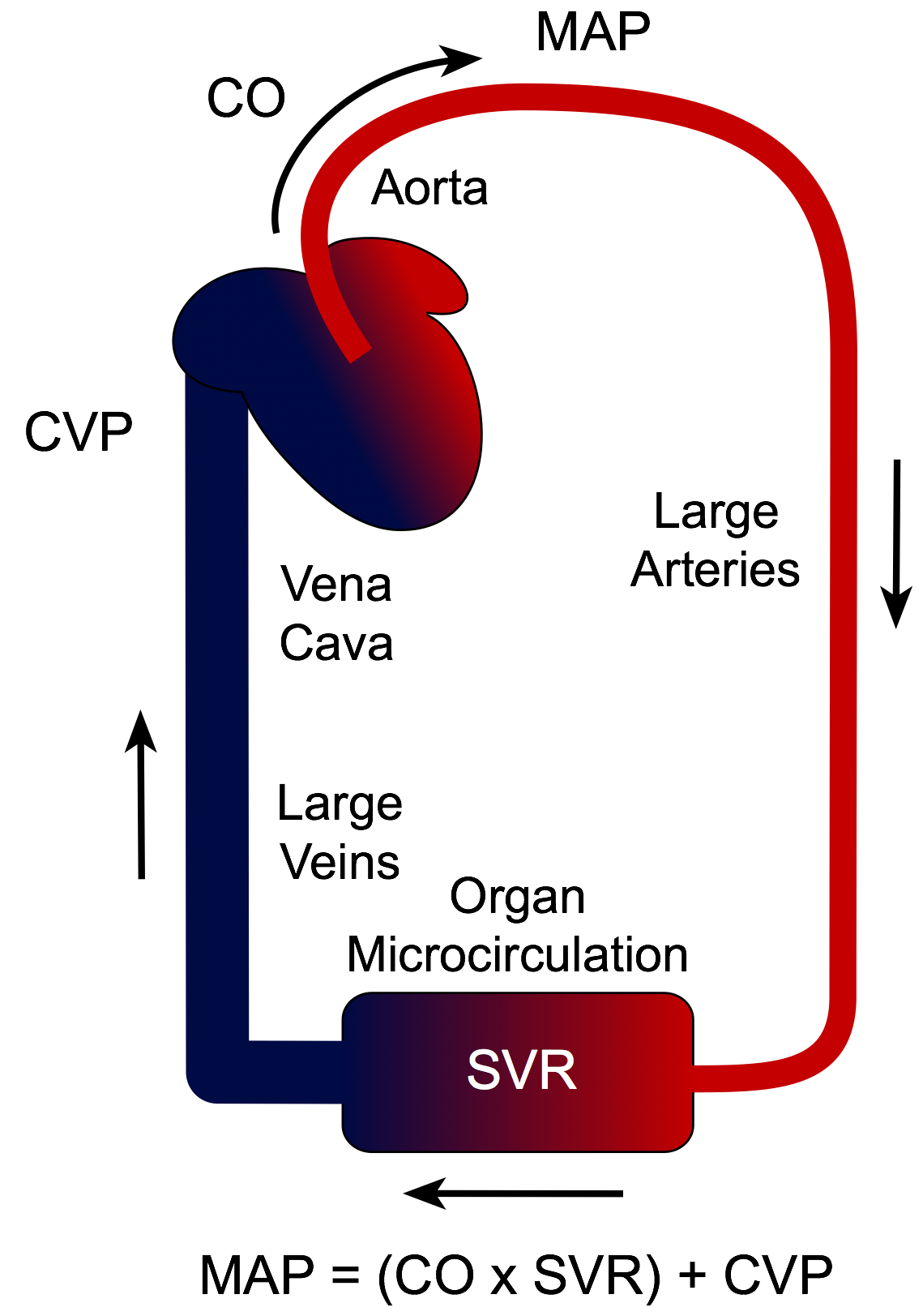 CV Physiology | Mean Arterial Pressure