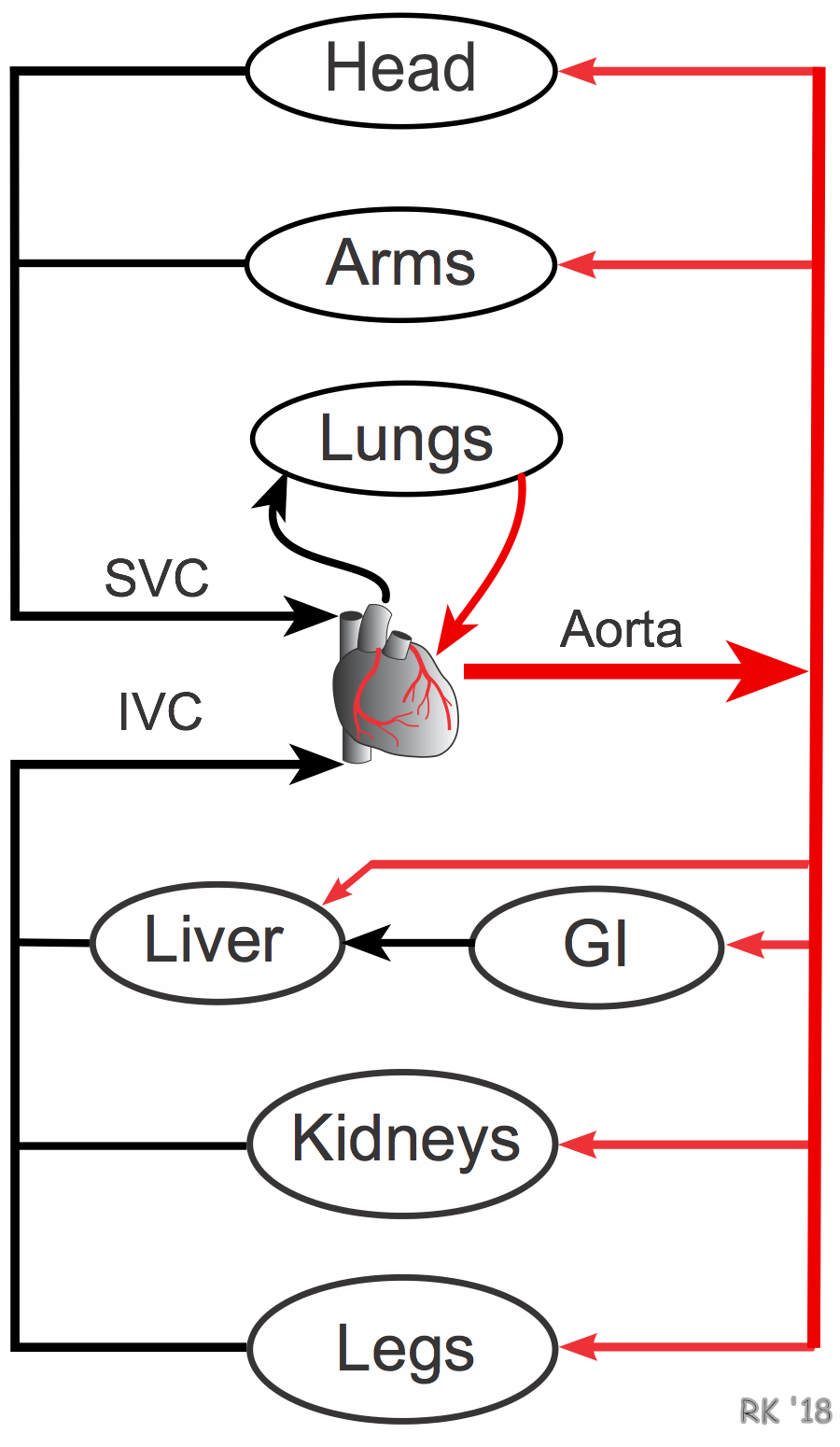 Cv Physiology Series And Parallel Vascular Networks Resistors In Organ Circulation Arrangement